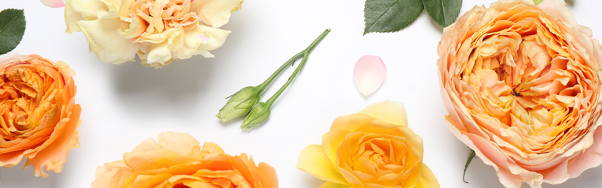 1210 RymanNZ Mothers Day Competition Website Banner 1920x600