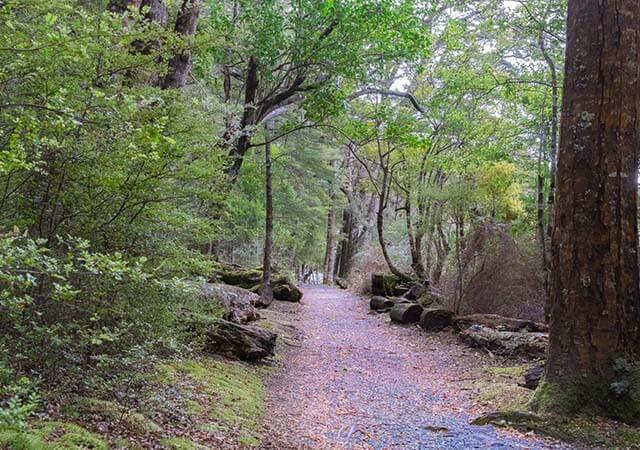New Zealand walking track