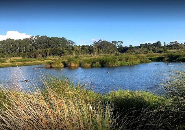 Waitatarua Reserve placer-640x450